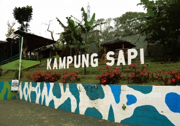 Kampung Sapi 1