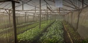 Green House, Kebun sayur di kaliandra Eco Resort